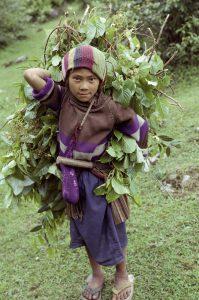 Nepal 1991a