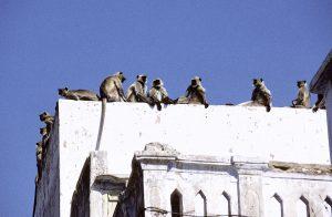 Indien 2003