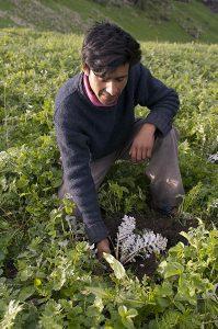 Himachal Pradesh 2007