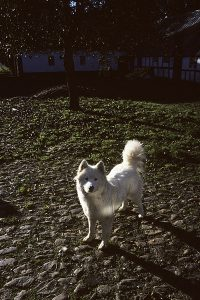 Jylland 1991-95