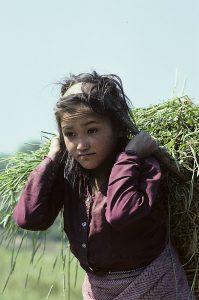 Nepal 1991