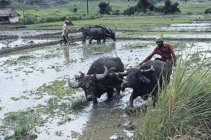 Sydasien 1982-83