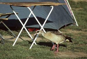 Sydafrika-Namibia 1993