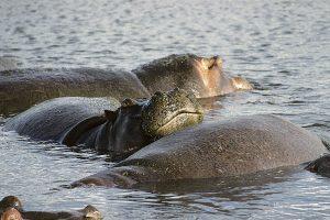 savannens dyr tanzania