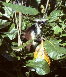 Tanzania 1993