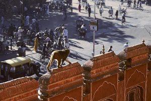 Nordindien 1991