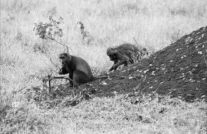 Tanzania 1988