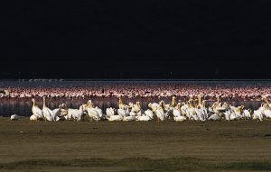 Kenya 1988-89